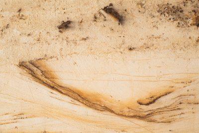 Schrägschichtung (Schräg geschichtete Sande mit Pflanzenresten, 15 Mio. Jahre)